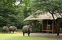 Falaza game park, South Africa