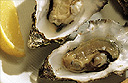 Hillsborough International Oyster Festival in Northern Ireland