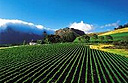Mont Rochelle and Mountain Vineyards, South Africa