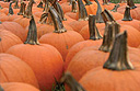 Pumpkin Fest at Fearrington, North Carolina