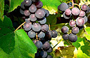 Bordeaux – enjoy wine, arts and fine dining