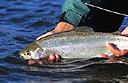 Flyfishing package at New Zealand's Fiordland Lodge