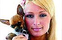Pampered pets at The Ritz-Carlton, Sarasota