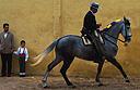 Jerez Horse Fair 2007