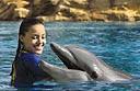 Swim with dolphins