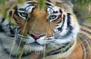 The rich wildlife of Madhya Pradesh