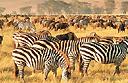 See the Masai Mara migration from Olodana