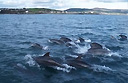 Want to go dolphin watching?  Head for the Isle of Man!