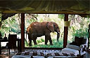 Sleep under the stars at Makanyane Safari Lodge, South Africa