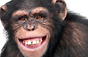 Top 10 places to monkey around