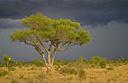 Brilliant plants of the Kruger Park