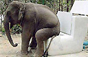 Elephants in southern Thailand must do their 'business' on state toilets