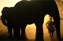 3 luxury safari camps in Botswana