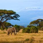 Photograph of the week: Amboseli National Park, Kenya
