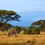Photograph of the week: Amboseli National Park, Kenya