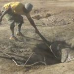 Dramatic footage showing a baby elephant rescued from a well