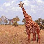 5 things you must see on a luxury Tanzanian safari
