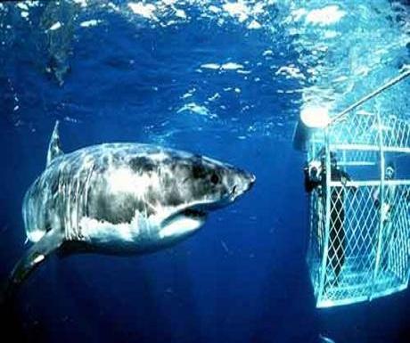 Great Life Hawaii Shark Cage Tour