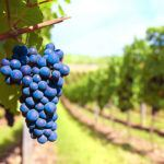 The 5 best wine destinations in the world