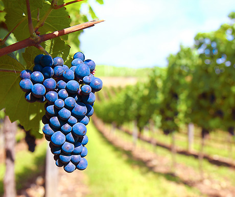 The 5 best wine destinations in the world - A Luxury Travel Blog