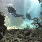 Diving in the Fijian islands and Tonga