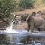 Elephant gets more than it bargained for in Botswana