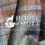 The House of Mutt - a new luxury hotel for your dog