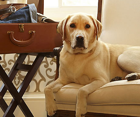 6 luxury UK hotels that welcome you, your children and your family dog - A Luxury Travel Blog