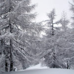Fresh snow in the French Alps - top tips for skiing in poor visibility