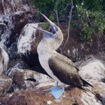 5 wild mating rituals from the Galapagos Islands