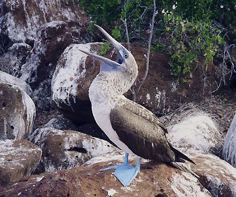 5 wild mating rituals from the Galapagos Islands - A Luxury Travel Blog