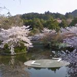 Japan's cherry blossoms captured on Google Street View