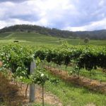 The top 5 wine regions in Australia