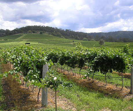 The top 5 wine regions in Australia - A Luxury Travel Blog