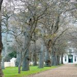 Groot Constantia – blending Olde Worlde charm with modern day passion