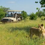 3 great reasons to safari in Zambia
