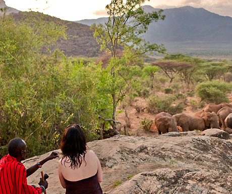 Elephants near Sarara Camp, Kenya