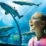 Family thrills aplenty in Florida