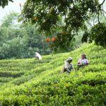6 unforgettable luxury Sri Lanka experiences