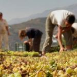The top 3½ wineries of La Axarquia, Andalucia