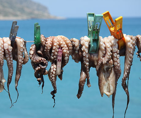 Octopus hanging to dry in Plaka