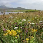 8 fantastic ways to encounter wildlife in the Outer Hebrides
