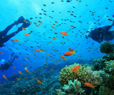 Samui diving
