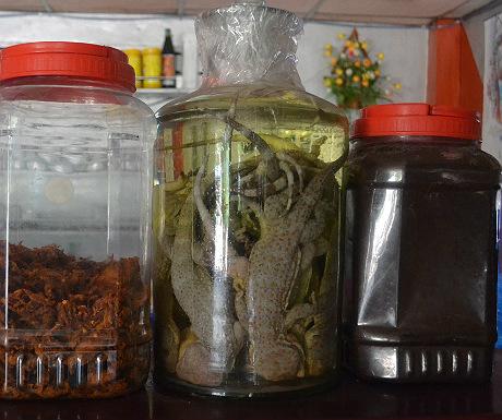 Lizard liquor
