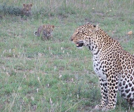Babies on safari