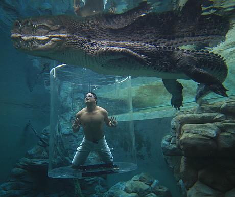 Crocosaurusc Cove