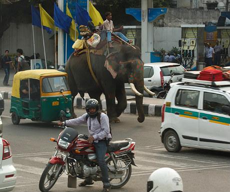 Elephant in New Delhi