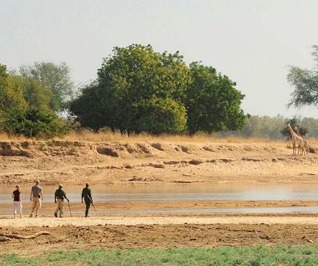 Norman Carr Walking Safari