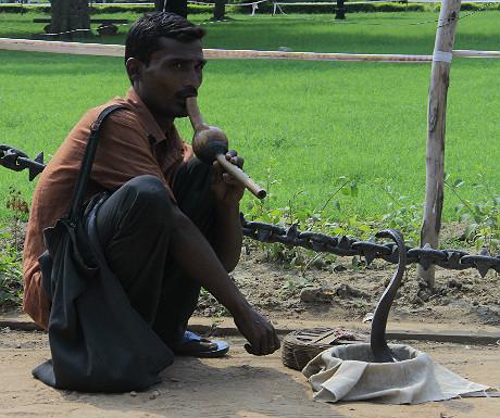 Snake charmer in New Delhi