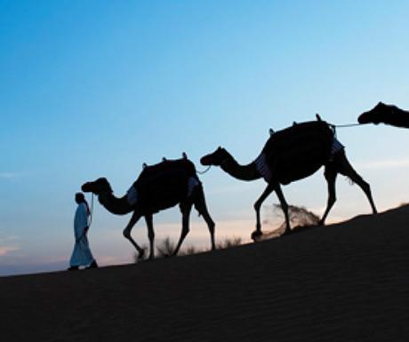 Al Maha sunset safari